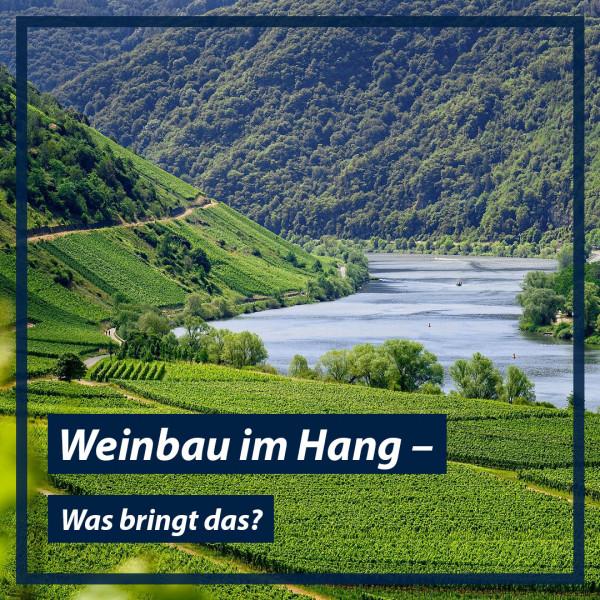 Weinbau-im-Hang