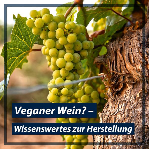 blog-teaser-bild_veganer-wein
